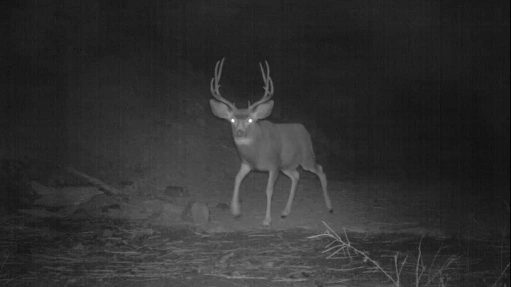 How to Hunt Deer at Night