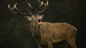 How to See More Deer While Hunting